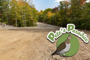 Pete's Paradise Illustration and a new trail