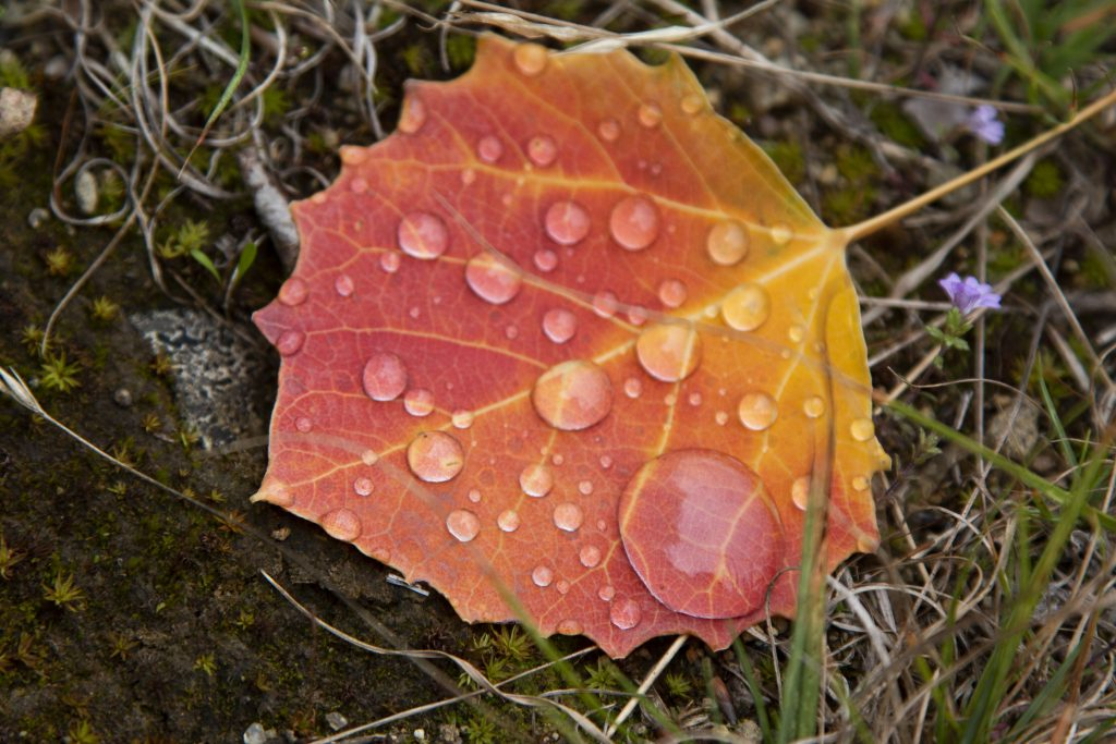 Colorful fallen leaf collecting dew